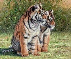 Tiger Cub Twins by Pip McGarry -  sized 24x20 inches. Available from Whitewall Galleries